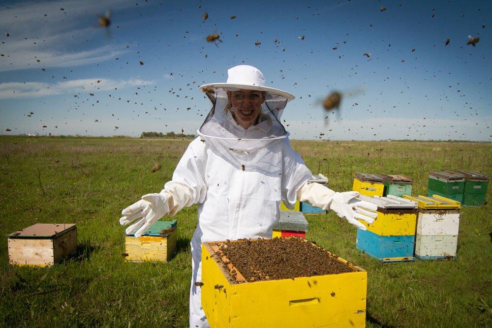 Comment sauver les abeilles de la disparition