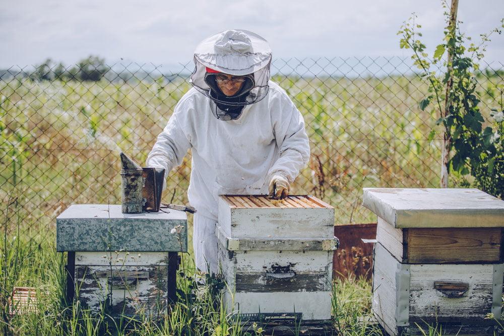 Pourquoi faut-il sauver les abeilles