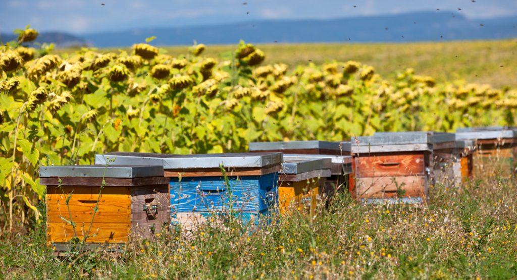 Quand parrainer une ruche et des abeilles