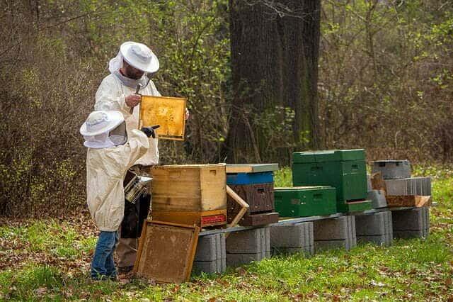 Combien de ruches faut il pour être apiculteur