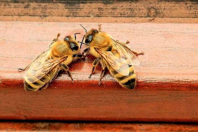 Combien de types d'abeilles dans une ruche