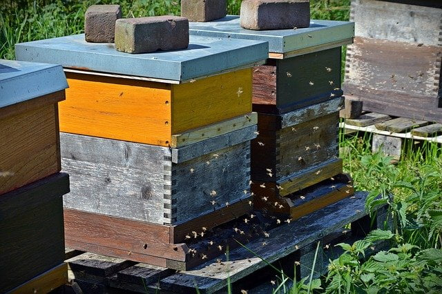 Comment déplacer des abeilles