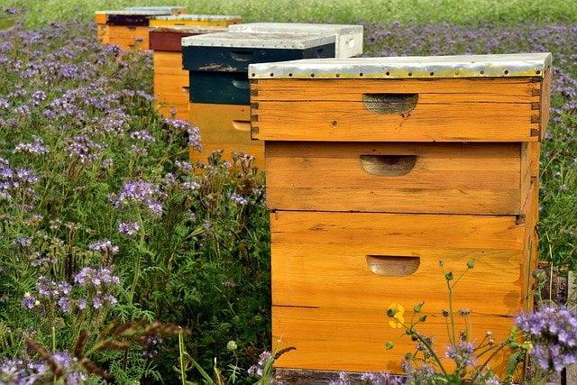 Comment déplacer une ruche