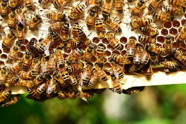 Comment entretenir une ruche