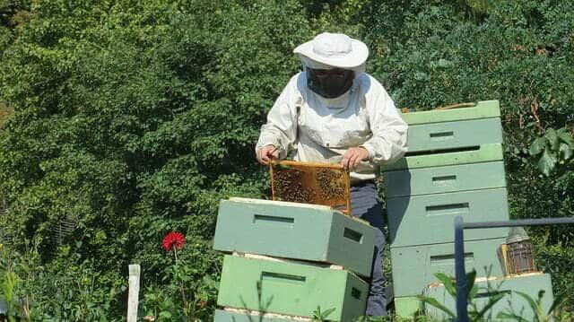 Comment nettoyer une ruche