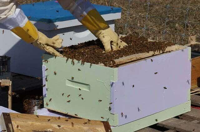 Comment récolter le miel