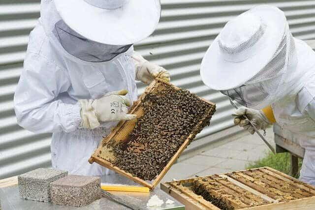 Pourquoi il faut adopter une ruche