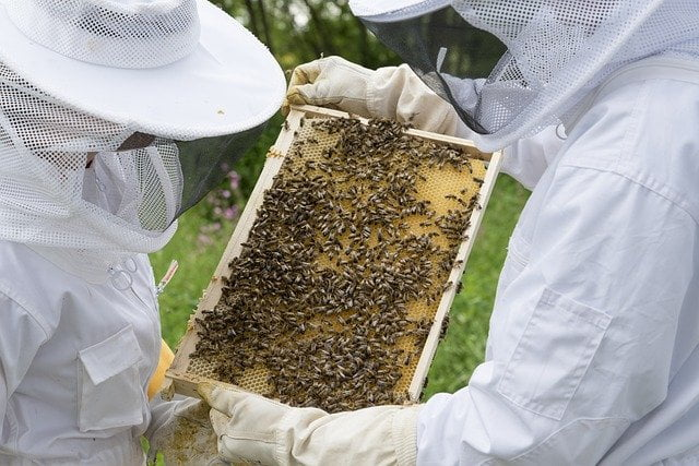 Pourquoi la tenue des apiculteurs est blanche