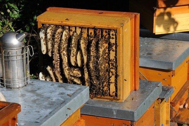 Pourquoi les abeilles font elles du miel