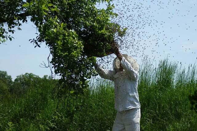 les apiculteurs ne se font pas piquer
