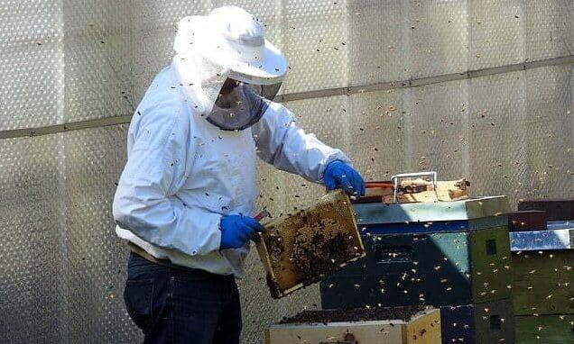 transvaser une ruchette dans une ruche