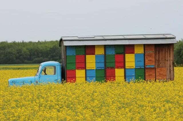 couleur de peinture pour les ruches