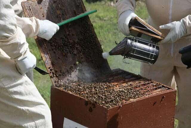 température pour ouvrir une ruche
