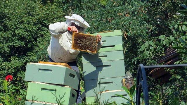 les avantages du métier d apiculteur