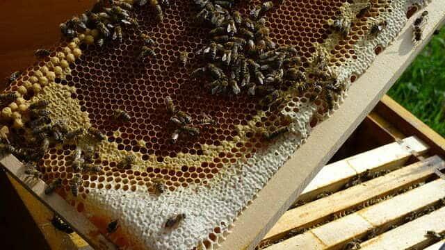 les différents éléments d'une ruche