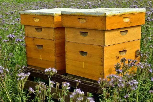 À quelle saison installer une ruche