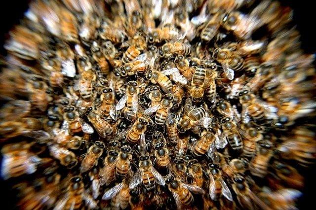 Combien d'abeilles vivent dans une ruche en été