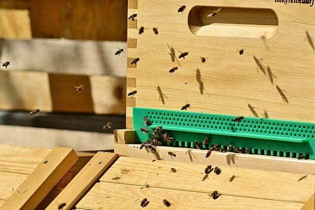 comment construire une ruche