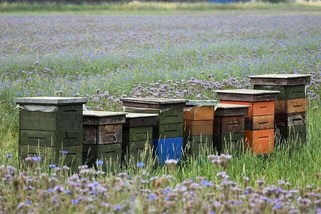 comment fabriquer une ruche