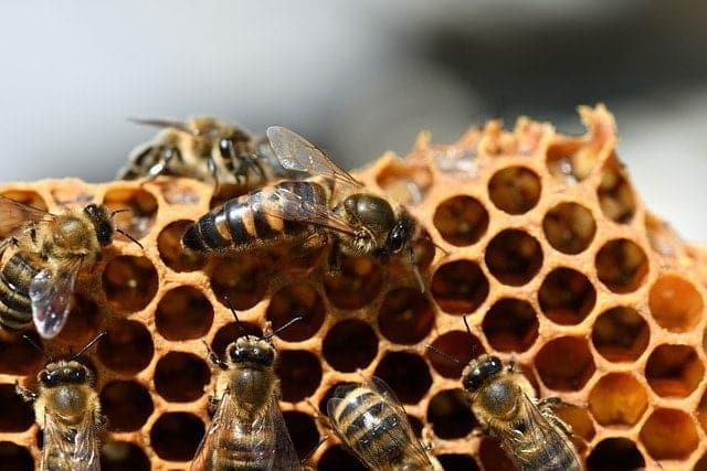 Quel est le rôle de chaque abeille